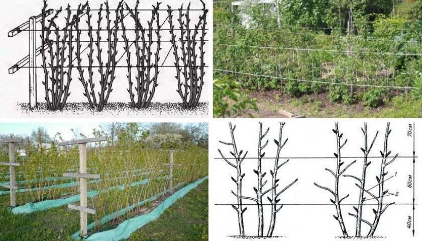 Уход за крыжовником весь сезон — основные правила выращивания
