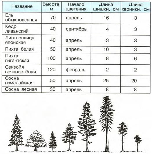 Низкорослые деревья в лесу