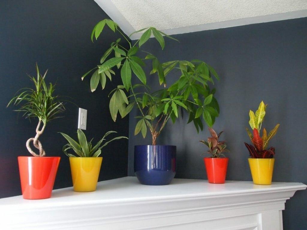 лучшие растения, которые любят тень