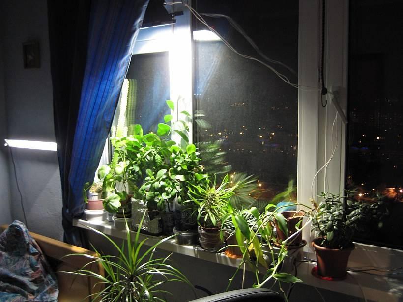 Комнатные цветы для темных помещений