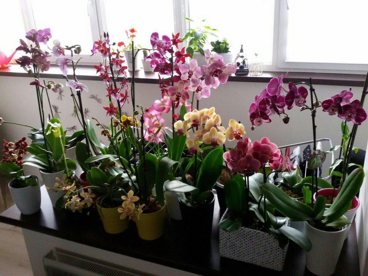 Как заставить цвести орхидею повторно, если она долго этого не делает: почему растение «ленится» и какие есть 9 правил для домашних условий, чтобы его стимулировать?