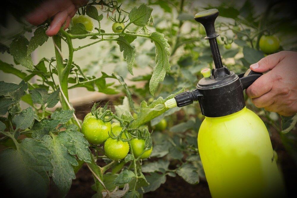 Посадка и выращивание дюшенеи индийской дома: как поливать, удобрять, обрезать