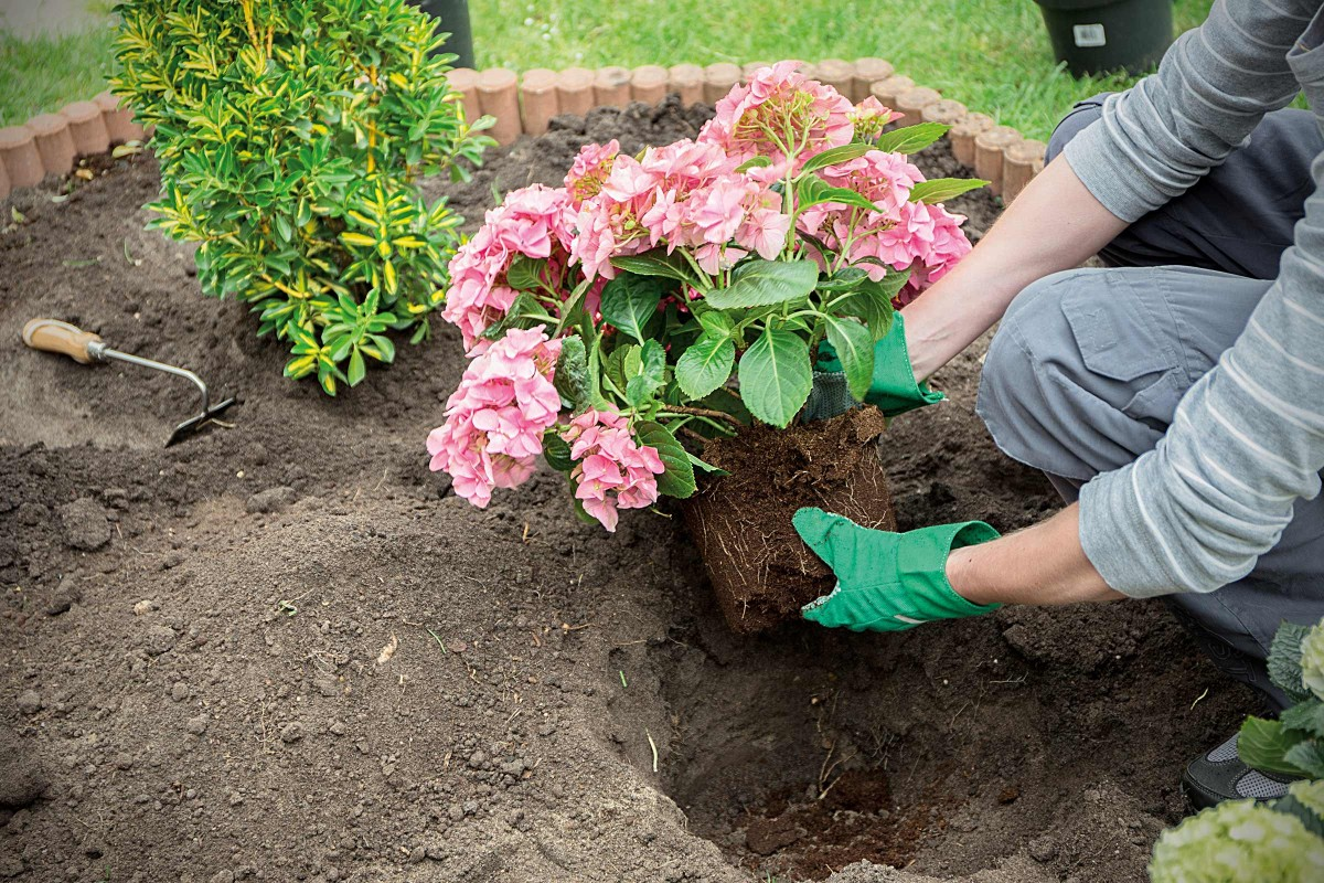 Арабис: посадка и уход в открытом грунте. тонкости выращивания арабиса в саду: размножение, подготовка к зиме