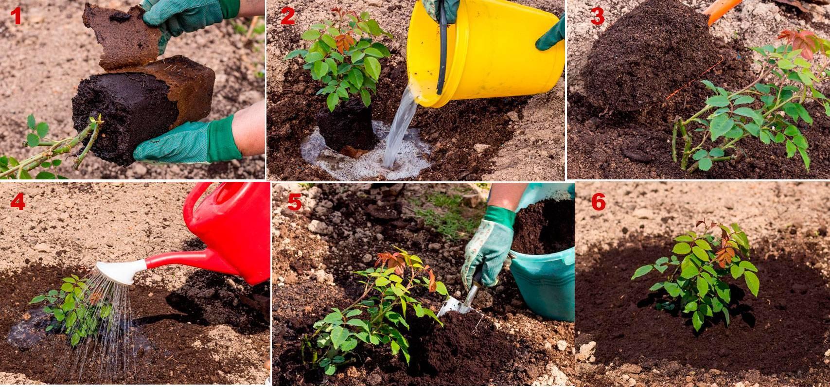 Что посадить на участке, если почва щелочная
