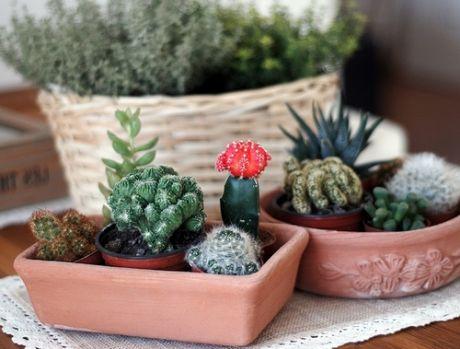 Кактус в доме - защитник от негатива: интересные приметы о колючем растении - досуг - мой дом на joinfo.ua
