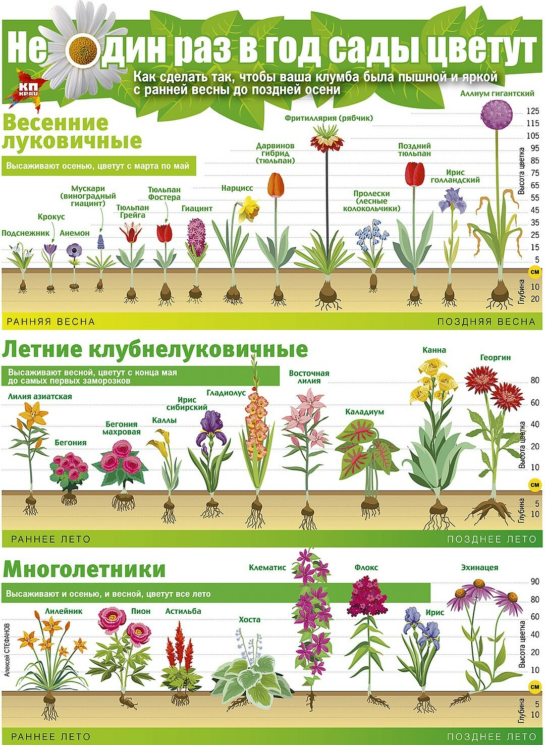 Необходимые условия содержания педилантуса дома: варианты обрезки и цветения