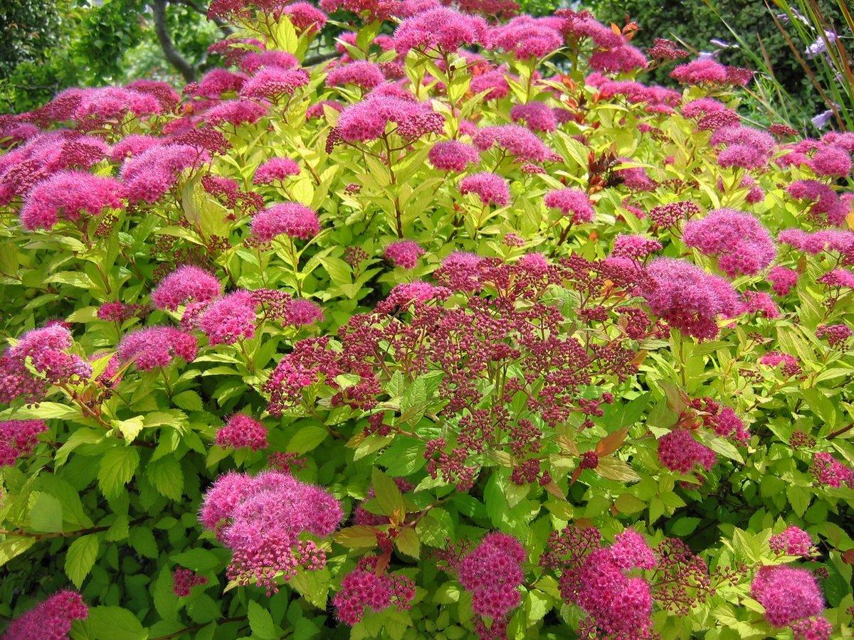 4 способа, как красиво разместить декоративные кустарники в саду