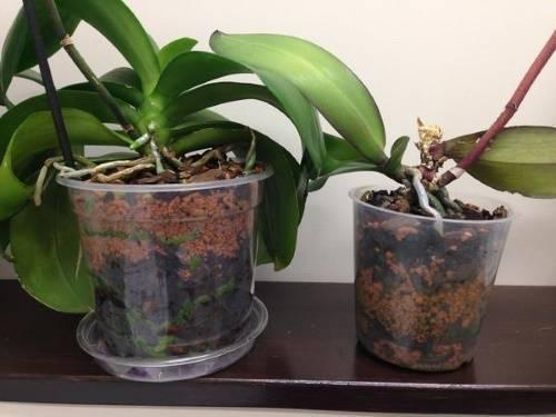 Выбираем горшок для пересадки орхидеи, основные требования