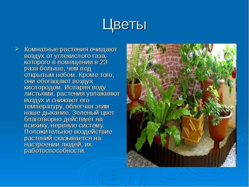 Комнатные растения - очистители воздуха жилищ. домашние растения, очищающие воздух