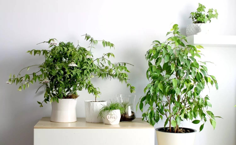 Примеры пользы и вреда орхидеи в доме, варианты в спальне и квартире