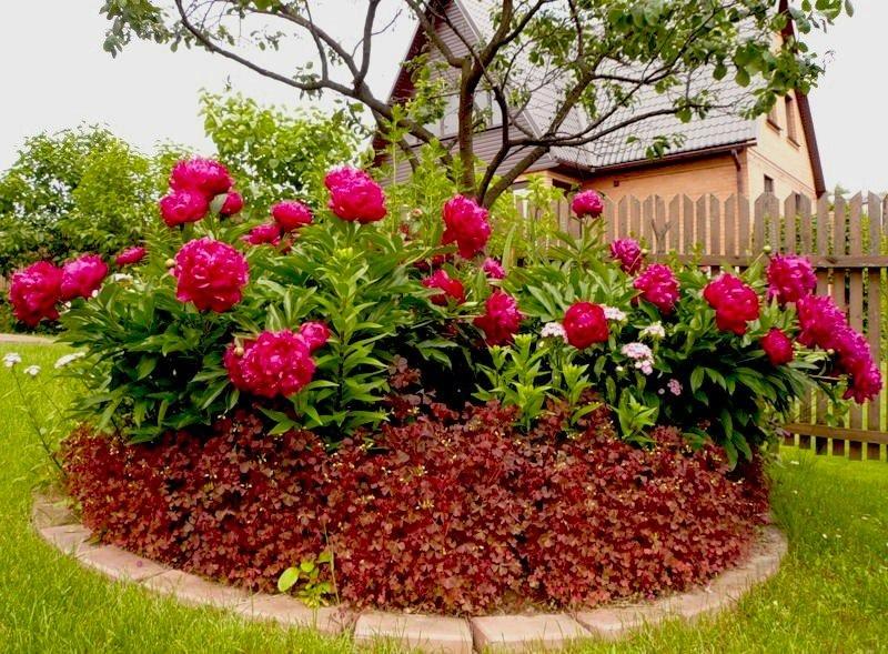 Бальзамин уоллера (30 фото): популярные сорта, особенности выращивания из семян. когда и как сеять на рассаду?