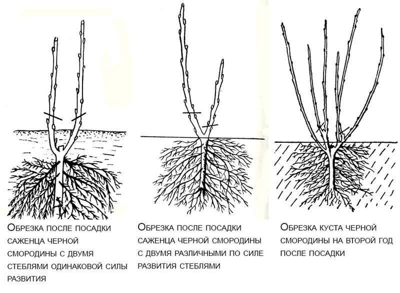 Когда сажать обриету (аубрецию)? особенности выращивания из семян