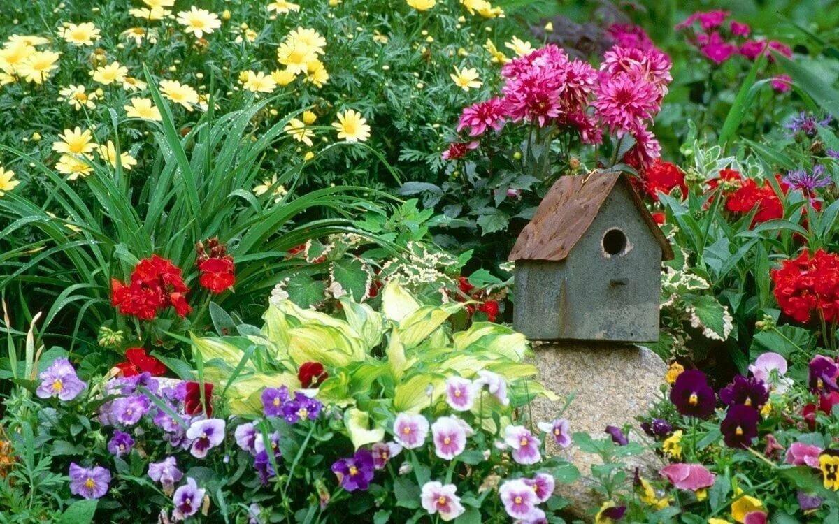 Фиалка: описание и правила выращивания