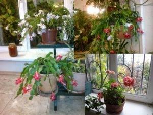 Что можно выращивать на северном балконе – лучшие теневыносливые растения