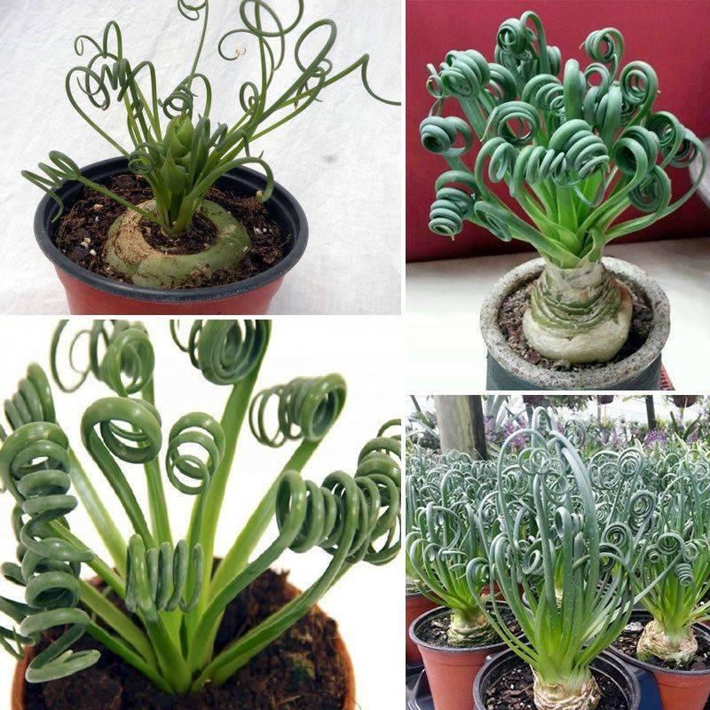 Необычные комнатные растения (45 фото): описание редких и экзотических цветов для дома. какие интересные домашние древесные растения можно вырастить?
