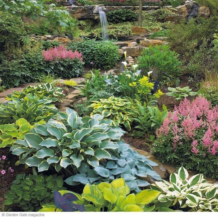 Хосты в саду или ландшафтные хитрости + 8 лучших сортов