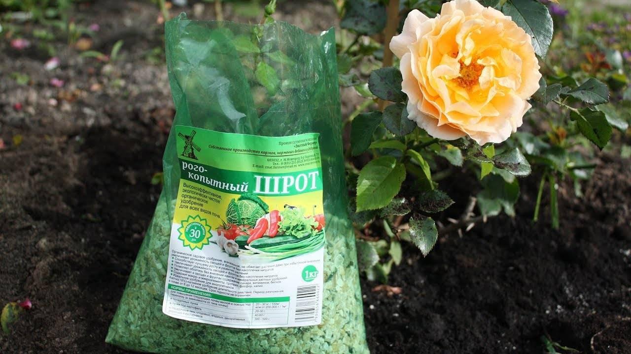 Подкормка роз летом