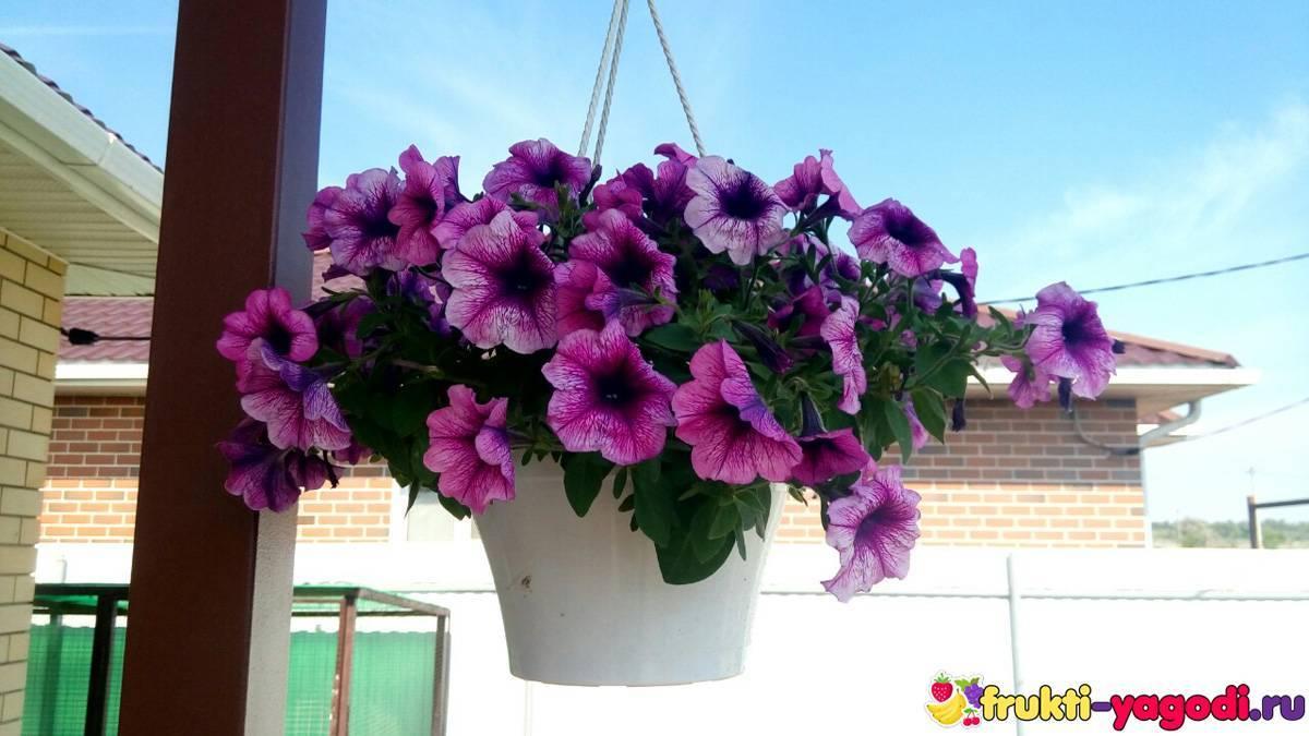Сажаем цветы на балконе в ящиках.