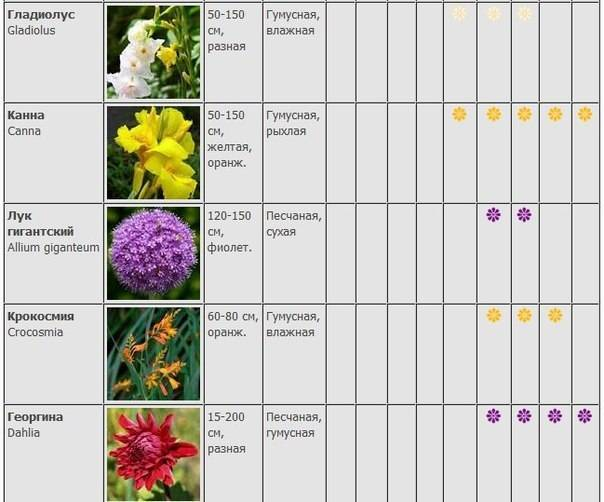 Условия ухода за юккой дома: температура, полив, размножение и другие особенности