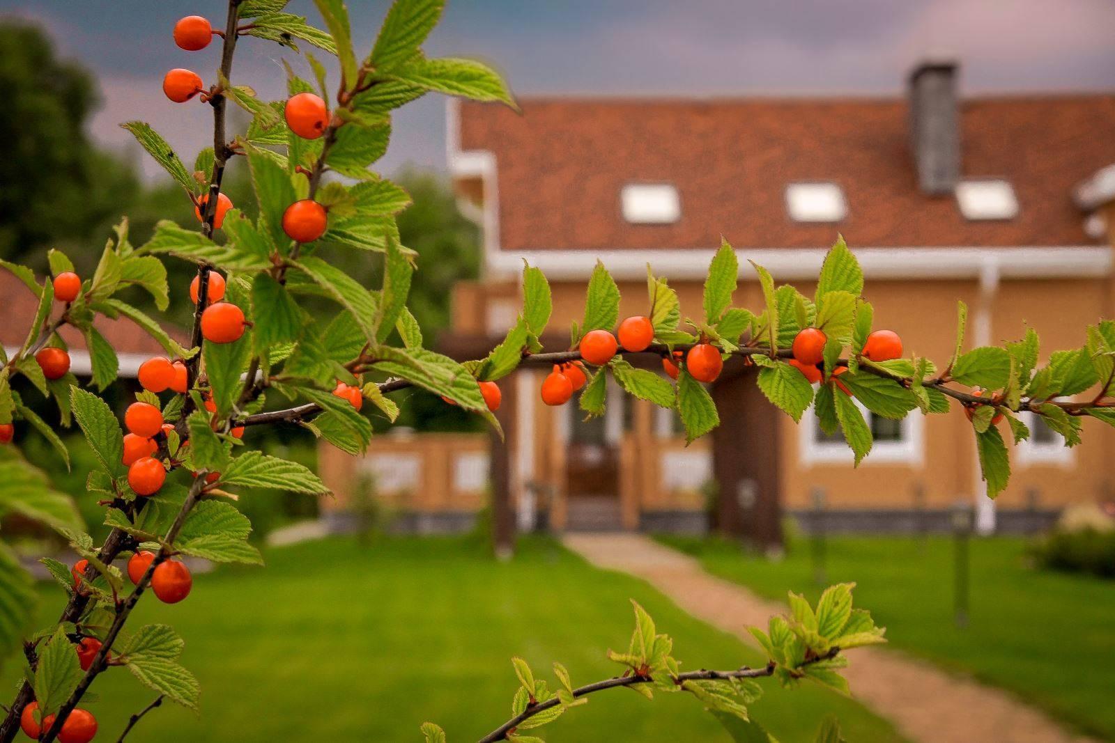 Колоновидный сад — плюсы и минусы