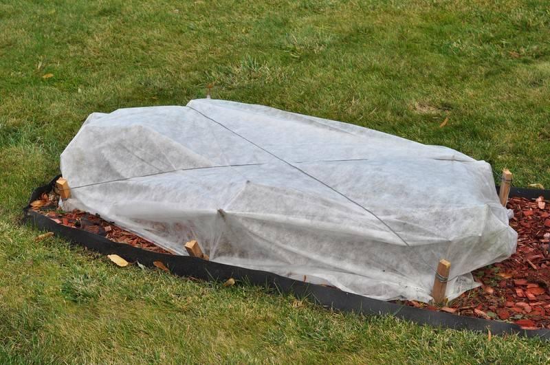 Не дайте садовой гортензии замёрзнуть! как укрывать гортензию на зиму?