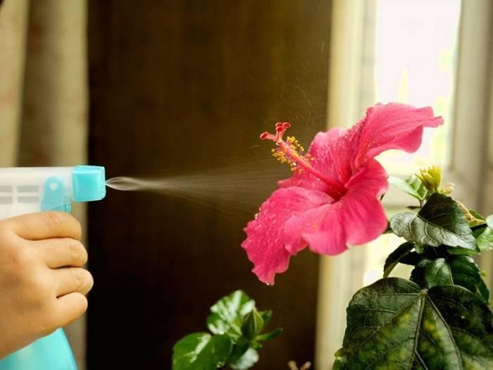 Размножение герани листом: можно ли вырастить цветок вегетативным способом в домашних условиях, что учесть и как ухаживать после посадки, а также требования к воде