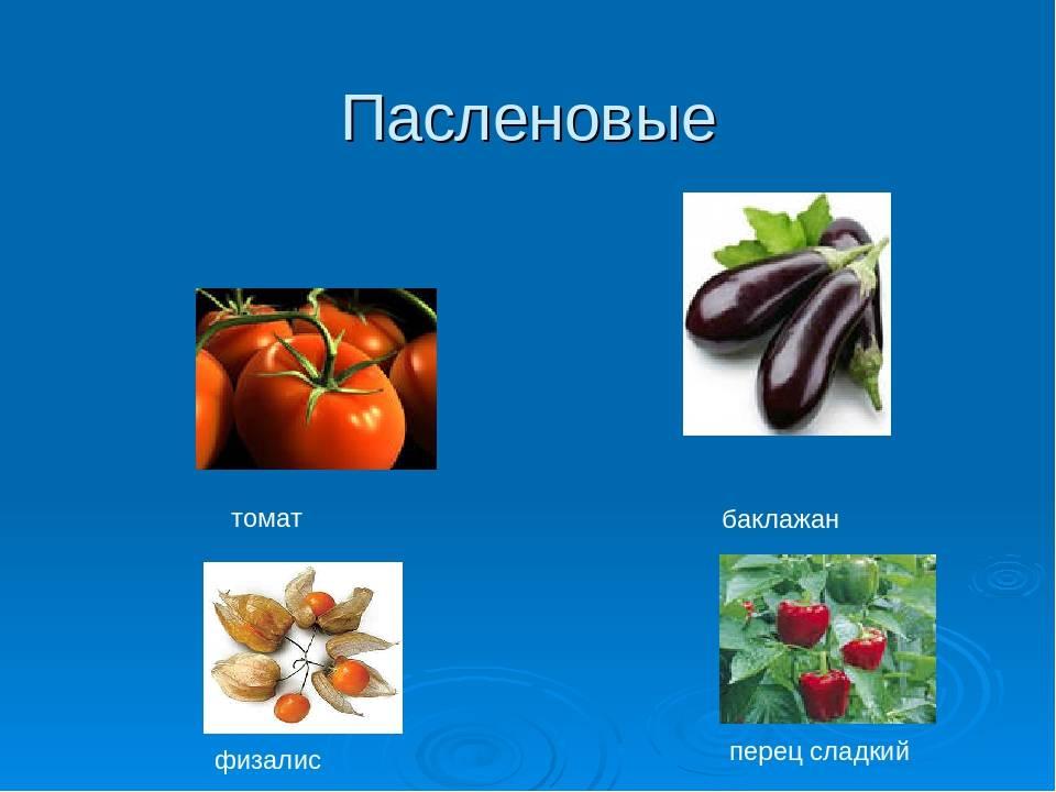 Список растений семейства пасленовых