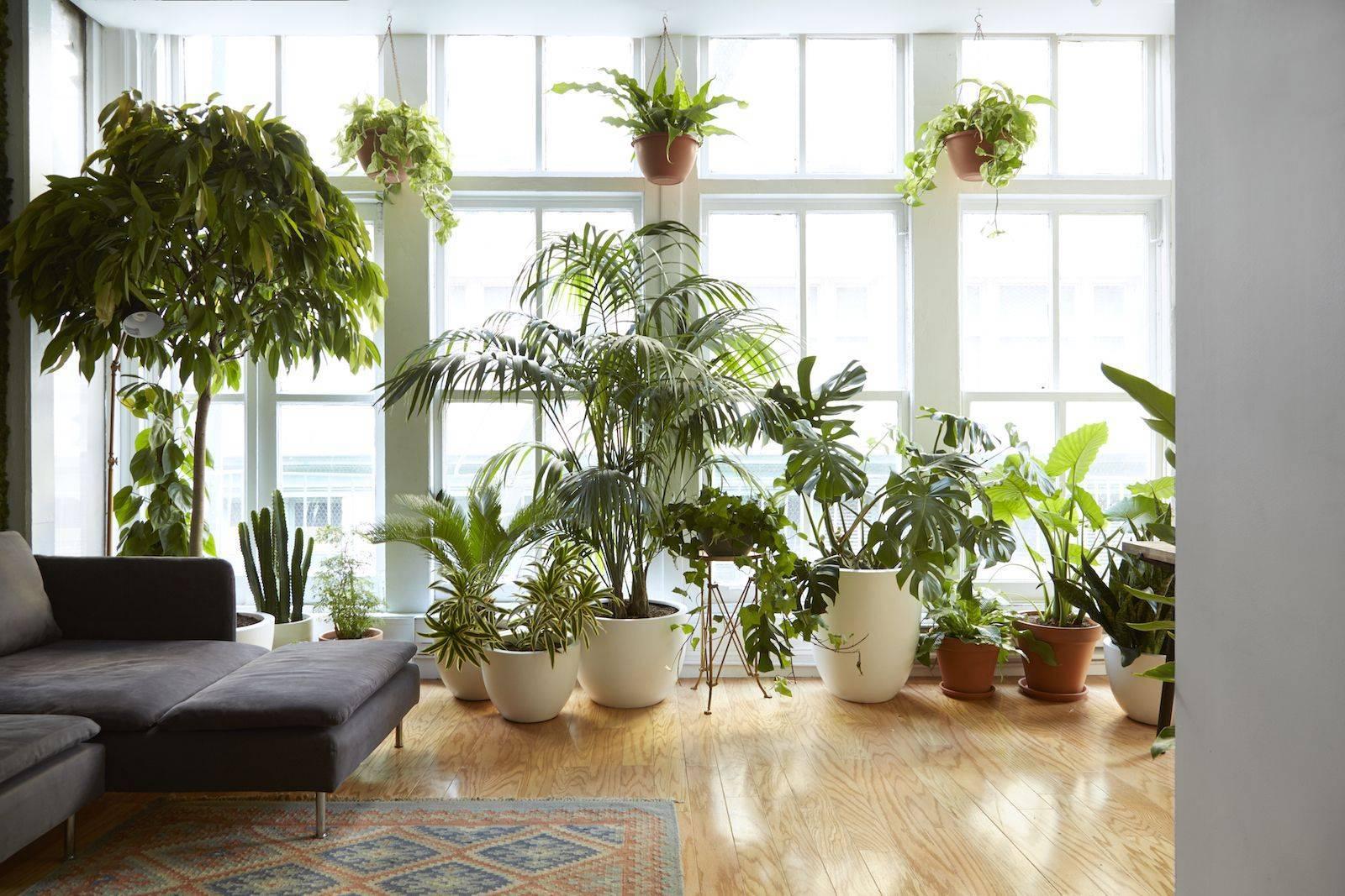 Освещение для комнатных растений: правильный световой режим