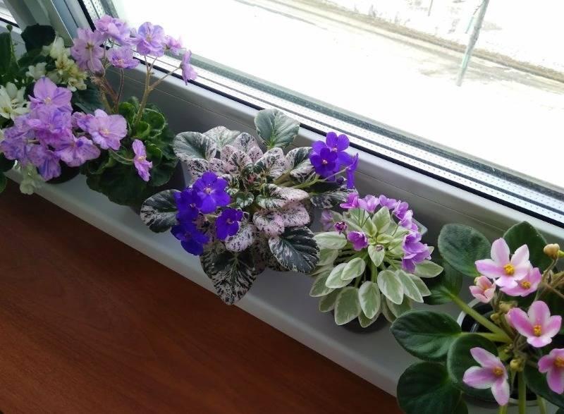 25 комнатных растений, которые полезно иметь в доме