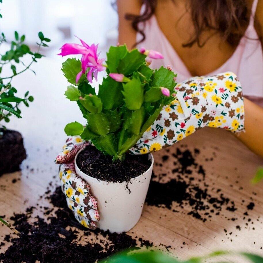 Пересадка комнатных цветов в домашних условиях