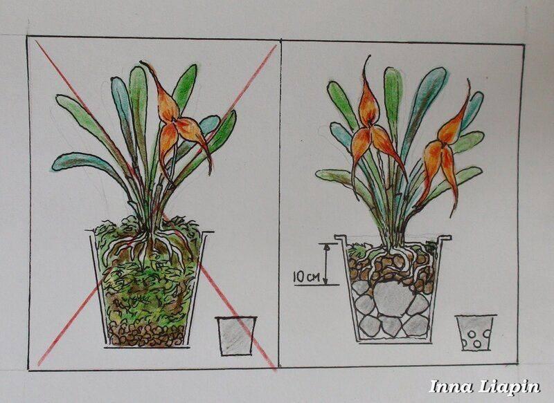 Рекомендации по уходу за растениями и правила агротехники: способы размножения и культивирования