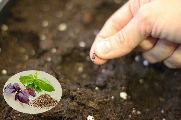 Какие растения посадить и посеять в цветник в мае