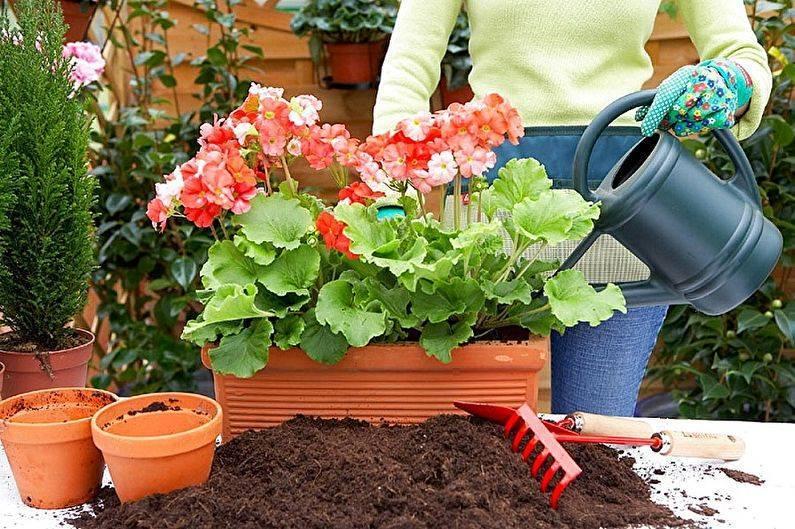 Кроссандра: выращиваем без проблем цветок-фейерверк в домашних условиях