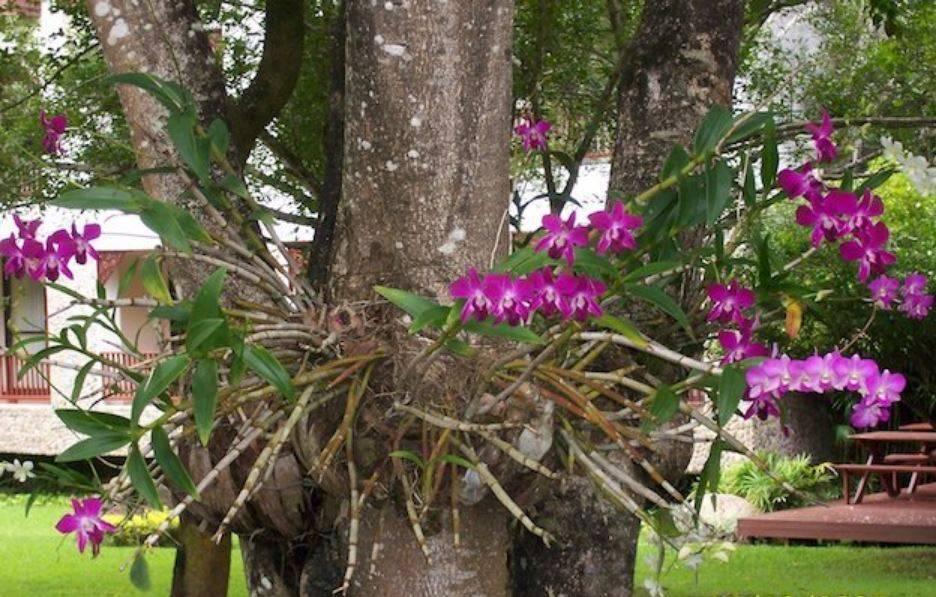 Фаленопсисы в природе: фото, внешний вид дикой орхидеи, ее сравнение с домашней, как и где растет цветок, за что получил определение чуда