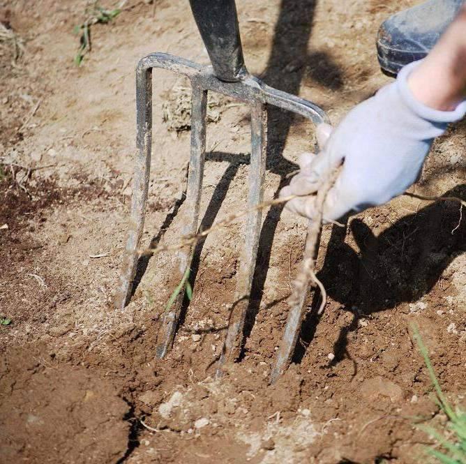 Как удалить сорняки с ваших грядок навсегда