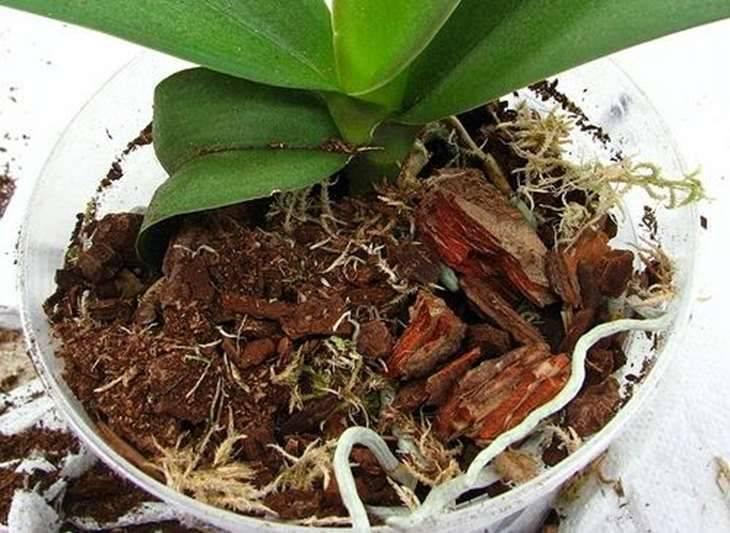 Грунт для орхидей: какой состав земли нужен растению, каковы требования к почвенной смеси необходимой для выращивания, а также как правильно сажать цветок?
