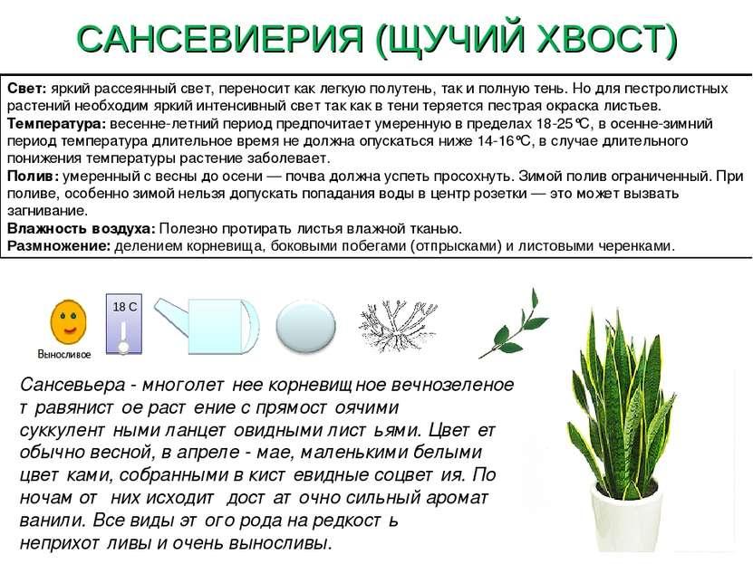 Как размножить сансевиерию? листом и вегетативный способ