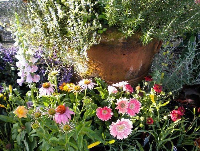 Правильная посадка и бережный уход за герберой садовой