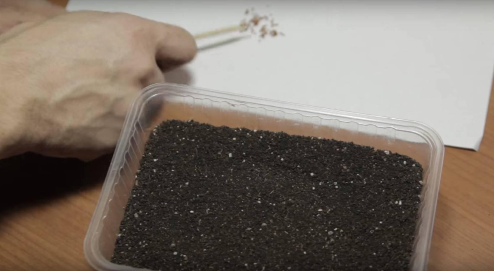 Грунт для кактусов: какая земля нужна для суккулентов? какой состав почвы подойдет для посадки? как сделать субстрат своими руками?