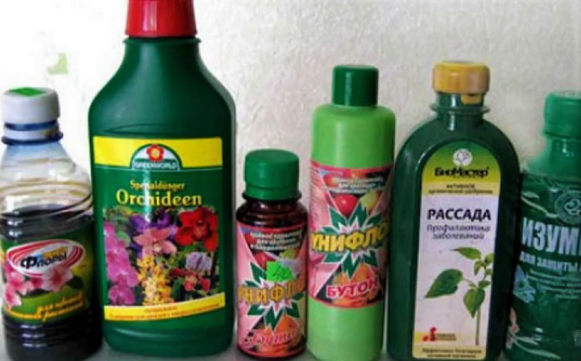 Чем подкормить герань — средства для обильного цветения и роста