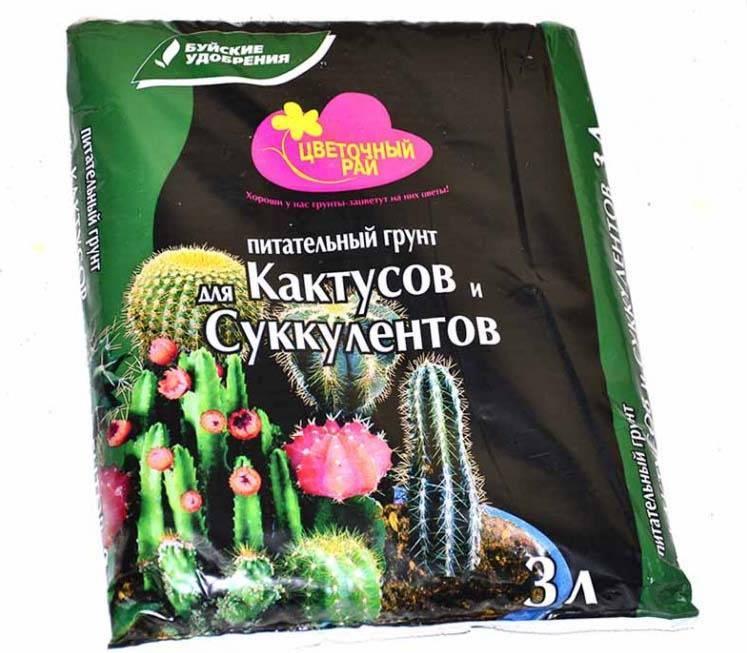 Правильное проведение пересадки кактуса: выбор грунта и варианты укоренения