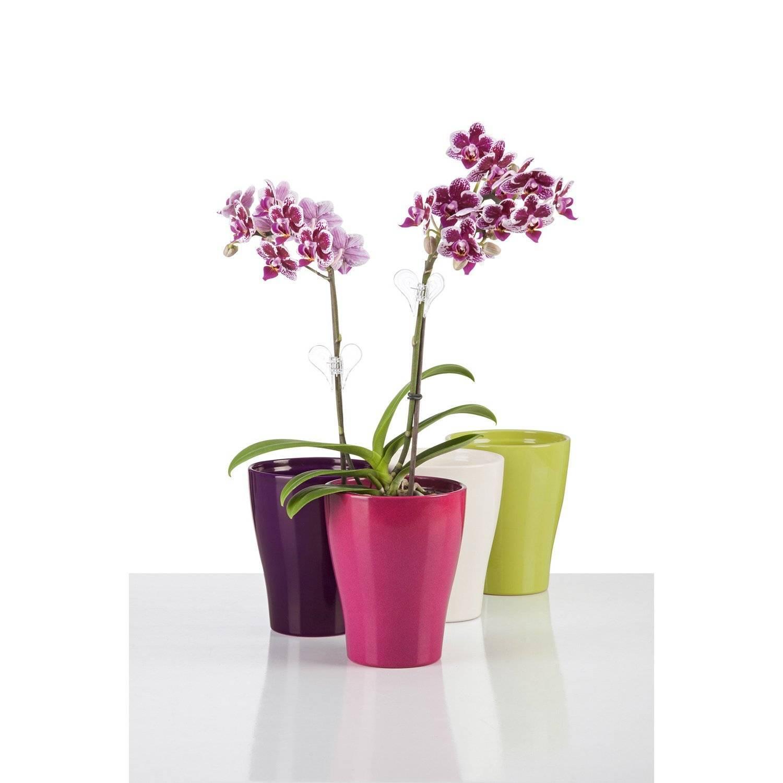 Как выбрать горшок для орхидеи: в какой сажать — стеклянный или кашпо? виды горшков, размеры и фото