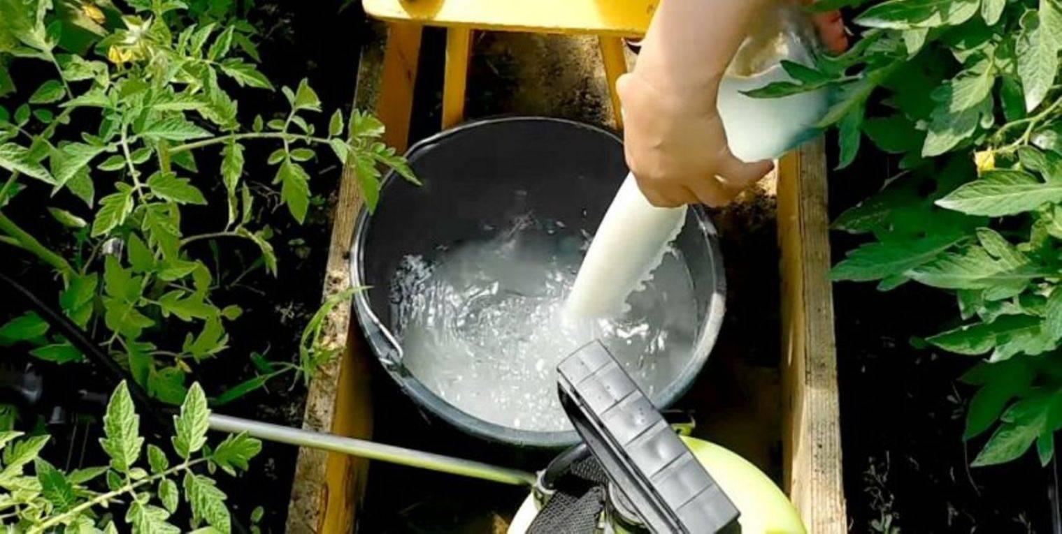 Что можно подкормить крапивой – лучшие рецепты зеленого удобрения