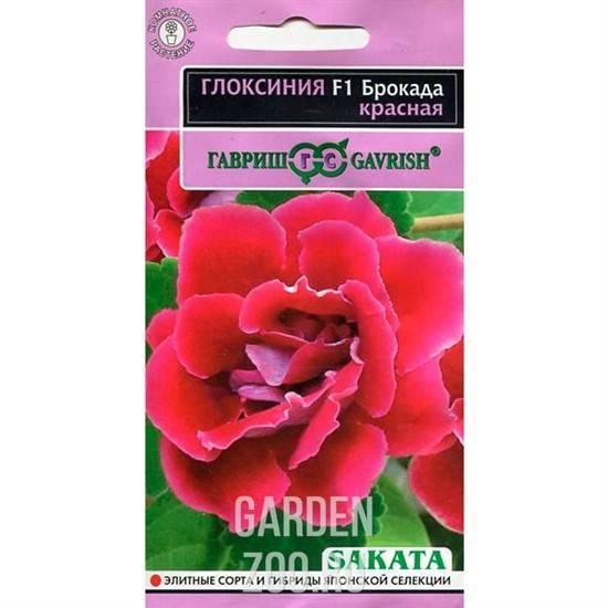 Глоксиния брокада: что это за цветок, описание красного и синего видов, посадка, уход и размножение растения, а также возможные вредители
