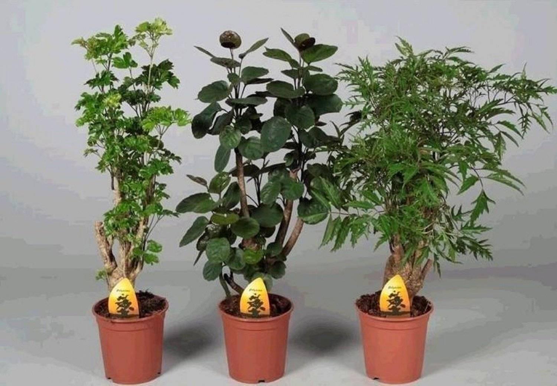 Условия ухода за мимозой дома: полив, почва, температура и размножение