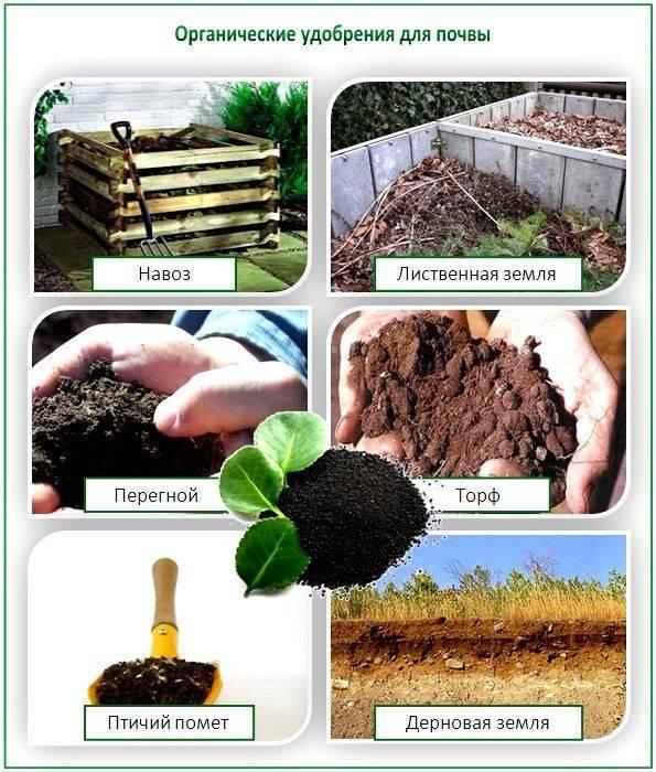 Как определить почву кислая или щелочная?