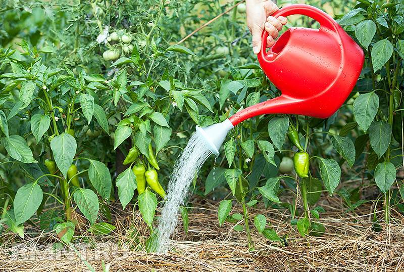 Ваш первый сад: чем, как и когда подкормить плодовые деревья весной
