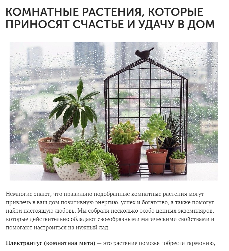 Комнатные растения для семейного счастья и благополучия