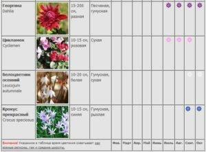 Обриета (65 фото): многолетние аубреции. посадка цветов и уход за ними. выращивание из семян. как сажать в открытом грунте?