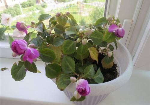 У орхидеи опали цветы: почему и когда это происходит, в чем причины, если быстро вянут все бутоны и нераспустившиеся тоже, что делать дальше, чтоб помочь растению?